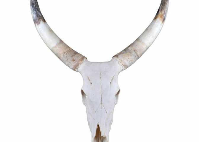 Horns and Skulls