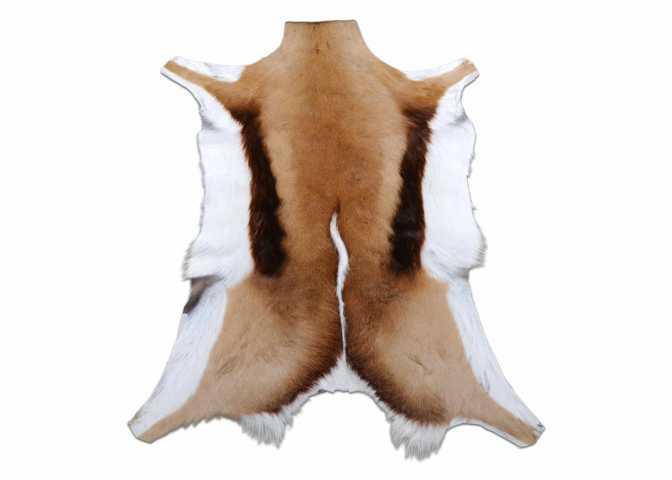Springbok Skin