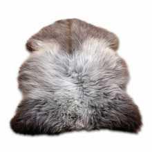 White/brown Texel's furry sheepskin